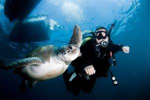PADI Course Director - Tenerife  canary10 1 300x200 - La mia galleria di foto sottomarine