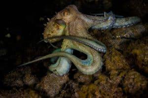PADI Course Director - Tenerife  canary4 1 300x200 - La mia galleria di foto sottomarine