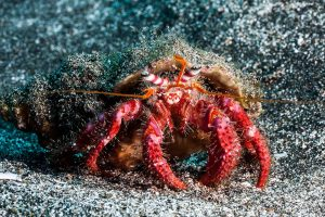 PADI Course Director - Tenerife  canary6 300x200 - canary6