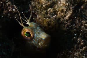 PADI Course Director - Tenerife  goby 1 300x200 - La mia galleria di foto sottomarine