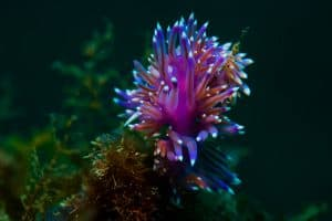 PADI Course Director - Tenerife  flabellina1 1 300x200 - My Underwater Gallery