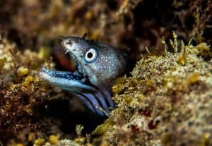 PADI Course Director - Tenerife  moray 300x207 - moray