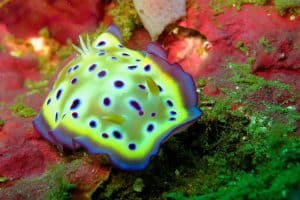 PADI Course Director - Tenerife  nudi 1 300x200 - My Underwater Gallery